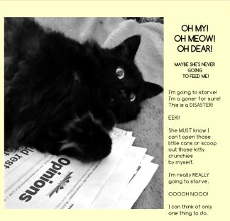 drake-charles-barkley-the-cat-book-9